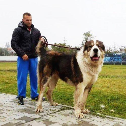 Canisa Dacia Burebista Petrosani